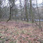 charcoal platform showing changes in vegetation