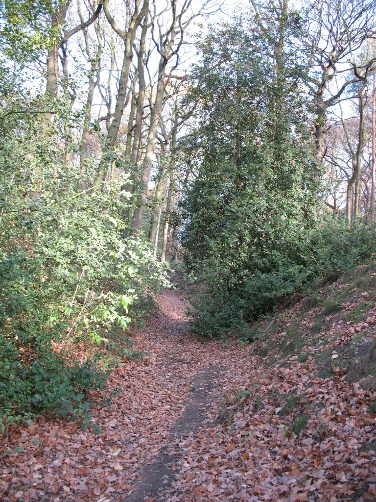 Route of old road through woodland