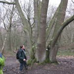 Veteran out-grown coppice