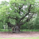 The Major Oak, Sherwood Forest.
