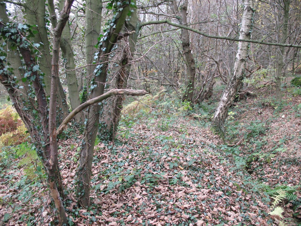 Bank and ditch boundary feature, now inside the woodland.