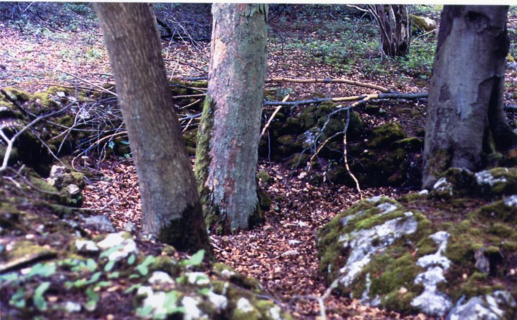 Remains of a Whitecoal kiln